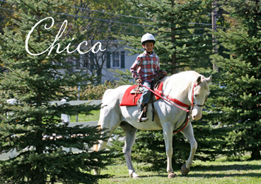 Chico - Gray Gelding for Sale APHA