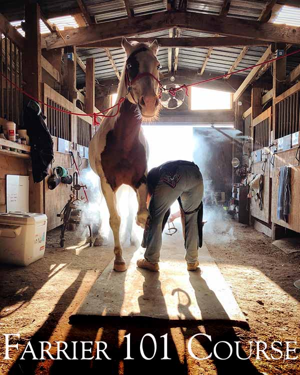 Farrier 101 Course on Horses Hooves and Care